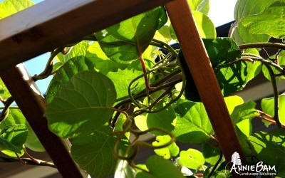annie-bam-landscape-design-edible-gardens-1