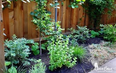 annie-bam-landscape-design-edible-gardens-2