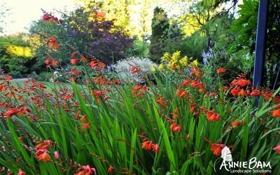 annie-bam-landscape-design-planting-schemes-1