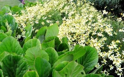 annie-bam-landscape-design-planting-schemes-10