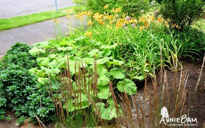 annie-bam-landscape-design-planting-schemes-5