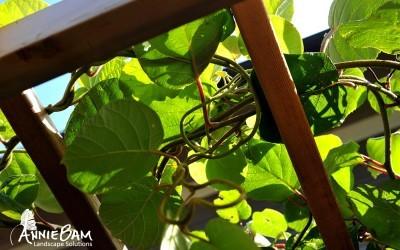annie-bam-landscape-design-planting-schemes-7