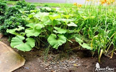 annie-bam-landscape-design-rain-harvesting-4